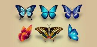 La niña atrapa mariposas